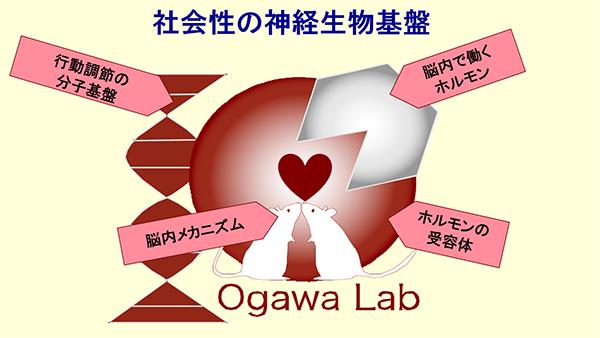 ogawa_zu1