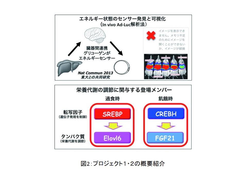 shimano_zu2