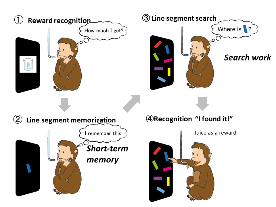 Fig. 1 The visual search task given to monkeys
