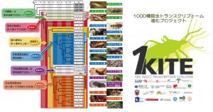 図1:1KITE により明らかになった昆虫の新たな系統関係