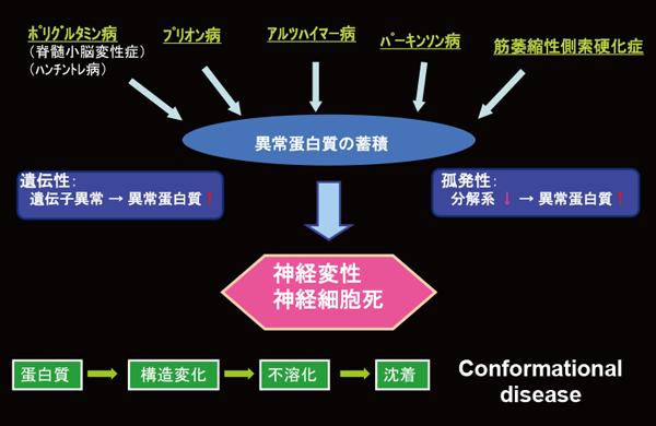 図1:神経変性疾患の分子病態