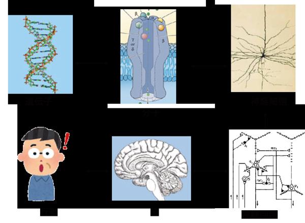 図3:脳の働き